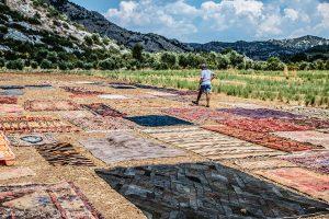 exporing carpet fields