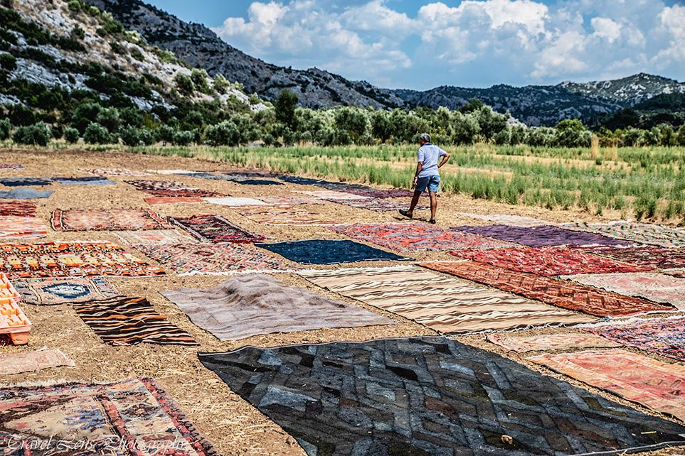 Carpet Fields
