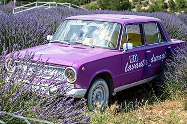 lavender car