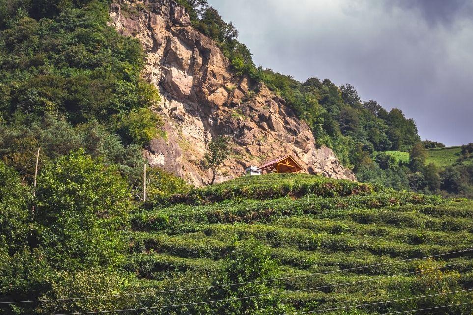 Tea Fields Rize